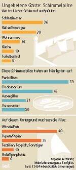 Schimmelpilze im Haus - Vorsicht, Schlafzimmer! - Stiftung Warentest