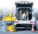 Hundeboxen fürs Auto Test