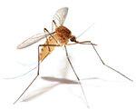 Mückenmittel Test