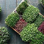 Microgreens Meldung