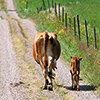 Tierhaltung Meldung
