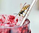Wespen, Bienen, Mücken Special