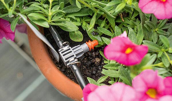 Pflanzenbewässerung Test