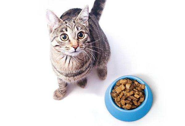 katzenfutter im test manches nassfutter kann katzen an die nieren gehen stiftung warentest. Black Bedroom Furniture Sets. Home Design Ideas