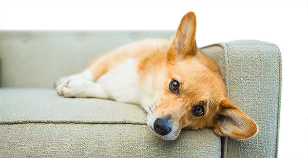 mietrecht hund darf bleiben wenn er nicht st rt meldung stiftung warentest. Black Bedroom Furniture Sets. Home Design Ideas