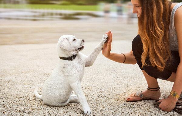 9794869b1fd159 Tierkauf online - Das müssen Sie beachten - Stiftung Warentest