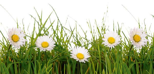 Gartennutzung Was Mieter Dürfen Stiftung Warentest