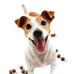 Hundefutter Test