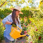 Pflanzenpflege Meldung