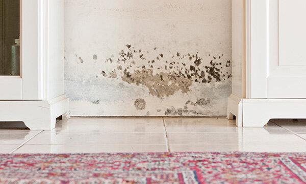 schimmel in der wohnung diese rechte haben mieter. Black Bedroom Furniture Sets. Home Design Ideas