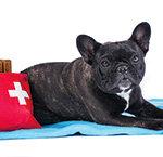 Hunde-Operation Meldung
