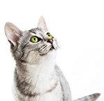 FAQ Katzenfutter Special
