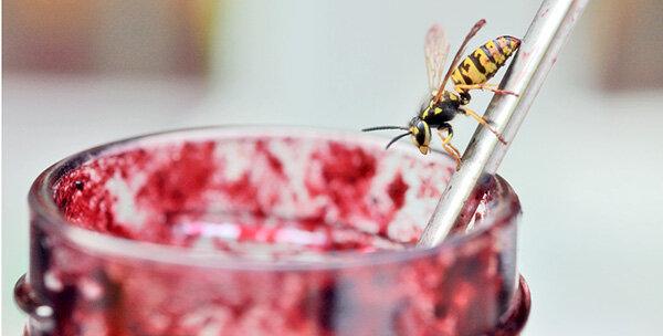 Wann Verschwinden Wespen