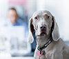 Hunde am Arbeitsplatz Special