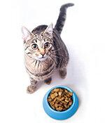 Katzennassfutter im Test Test