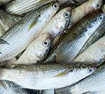Ratgeber Fischkauf Special