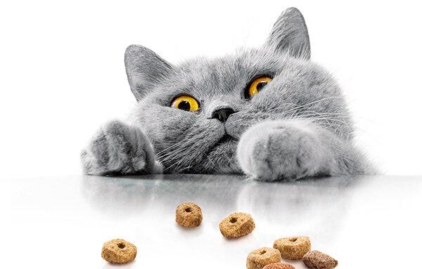 Katzenfutter Im Test Trockenfutter Fur Katzen Von Sehr Gut Bis