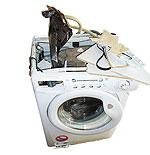 waschmaschinen von candy hoover totalschaden im badezimmer meldung stiftung warentest. Black Bedroom Furniture Sets. Home Design Ideas